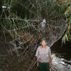The Biggest Spyder Web In The World