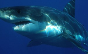 Only 3 Sharks Species Are Dangerous To Humans!