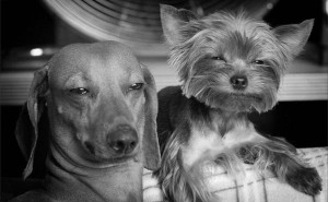 Dogs Getting High