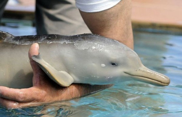 Abandoned Dolphin Baby