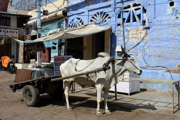jodhpur 06 e1298147643457 Blue City