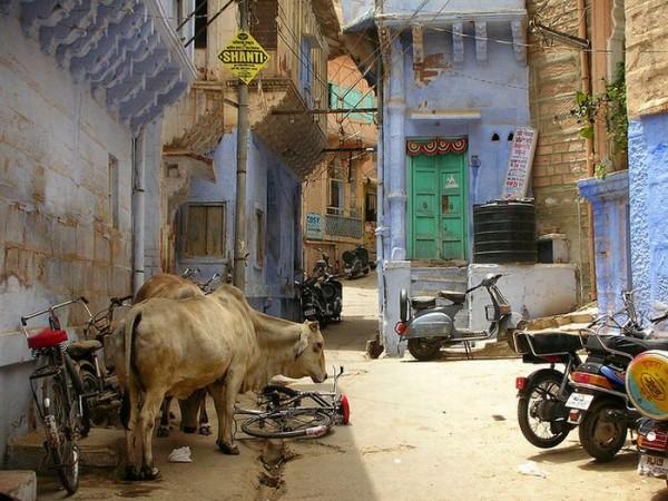 jodhpur 09 e1298147616348 Blue City